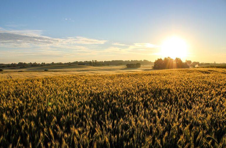 « Lever le voile » (4) : De l'année du Jubilé à l'année de grâce du Seigneur